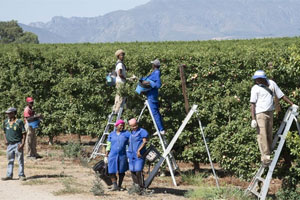 Agro-processing incentives to boost jobs and economy