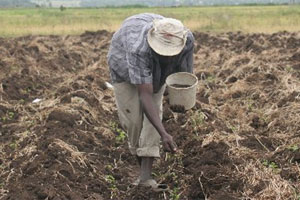 Tanzania to build $3bn fertiliser factory this year