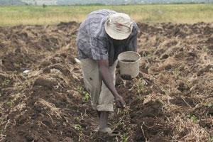 Tanzania to build $3bn fertiliser factory this year