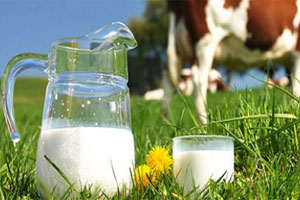 New breeding technology to boost milk production